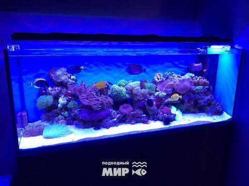 аренда морского аквариума