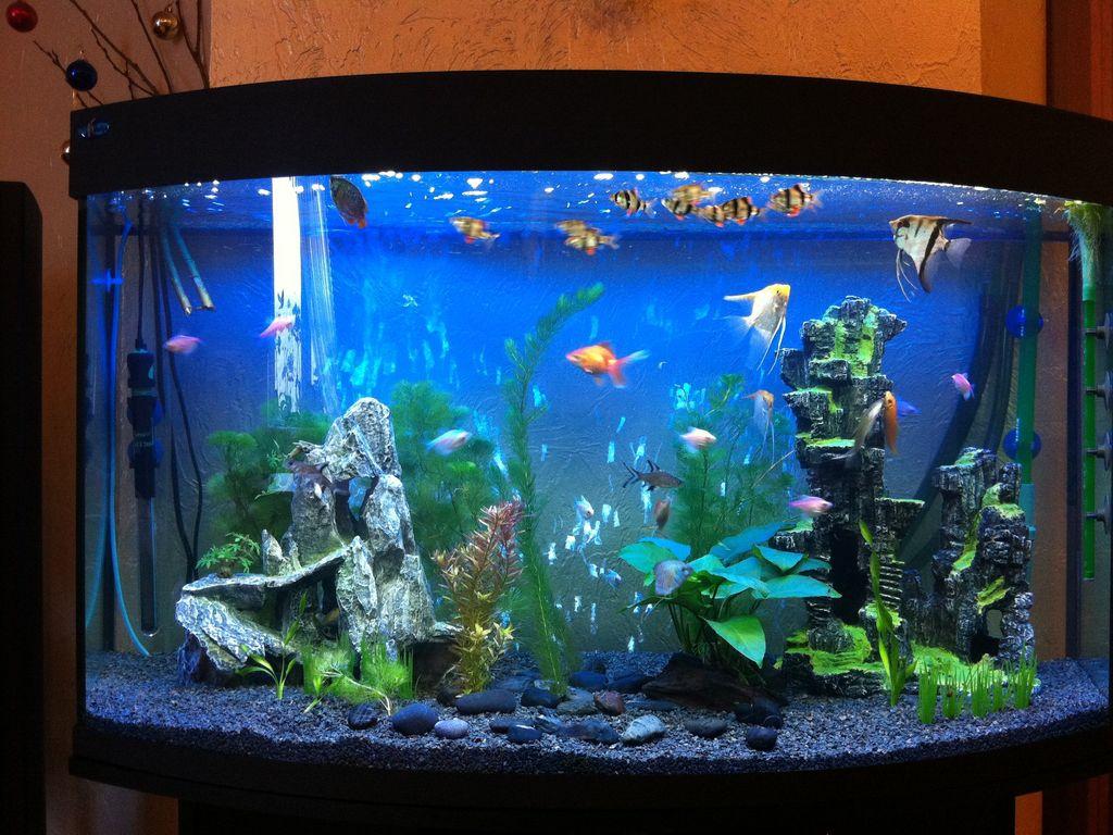 черные соревнования фото оформления аквариумов с живыми растениями очистить пропустить
