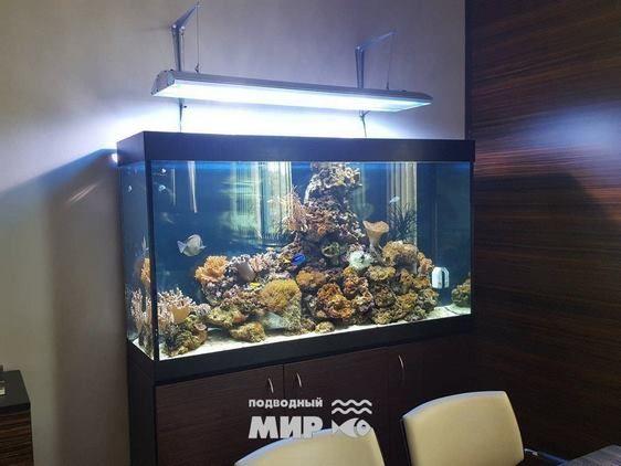 аренда аквариума