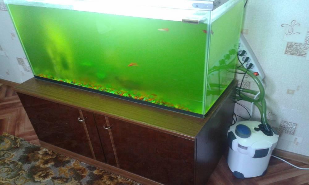 Как сделать чтобы вода в аквариуме была чистой 56