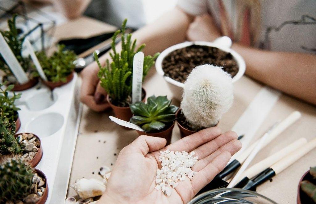 Флорариум из суккулентов своими руками пошаговая инструкция