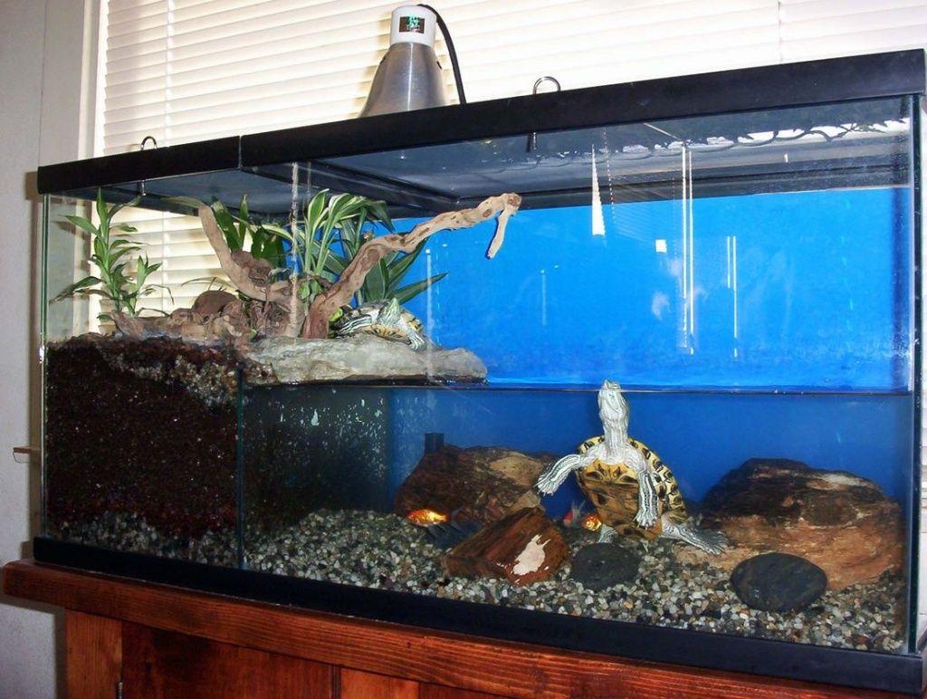 Чем мыть красноухую черепаху в домашних условиях 419