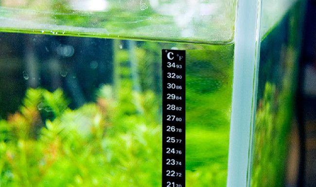 temperatura-dlya-skalyarijj-v-akvariume.jpg
