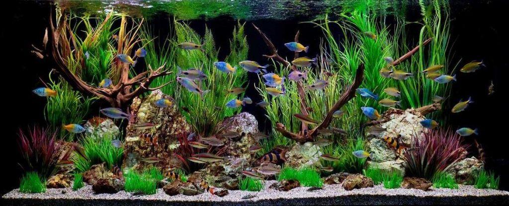 оформление пресноводного аквариума