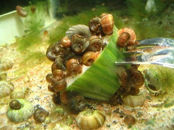 Snail_invasion.jpg