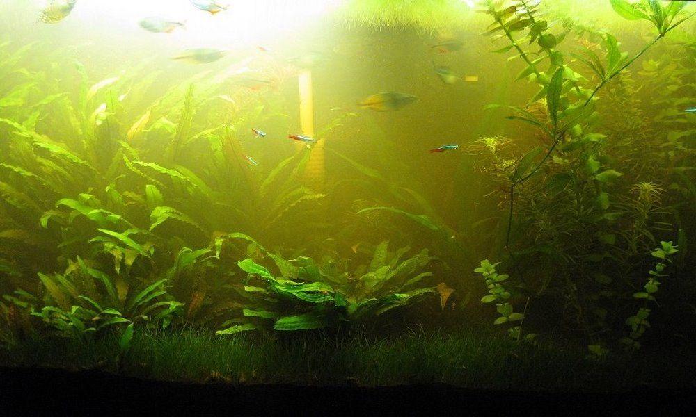 мутная вода в аквариуме что делать подводный мир