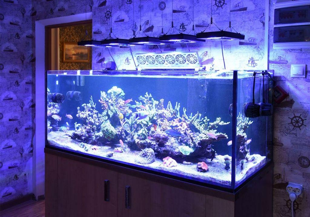 рифовый аквариум купить