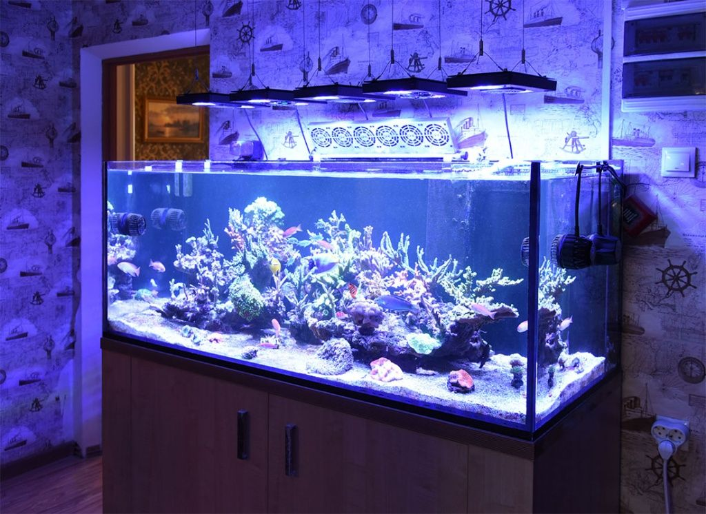 аквариум с жескими кораллами
