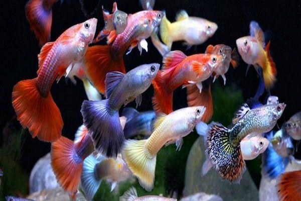 фото всех мирных аквариумных рыб послужило причиной этого